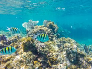 Où faire de la plongée en apnée à cuba