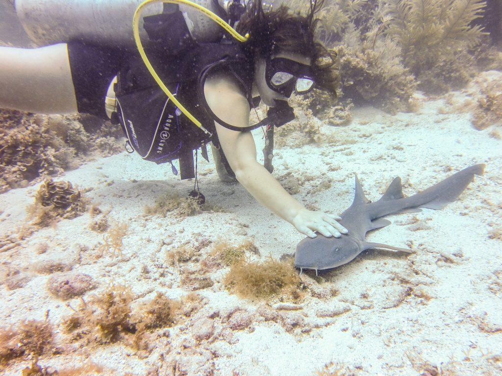 Macarena qui flatte le gentil requin