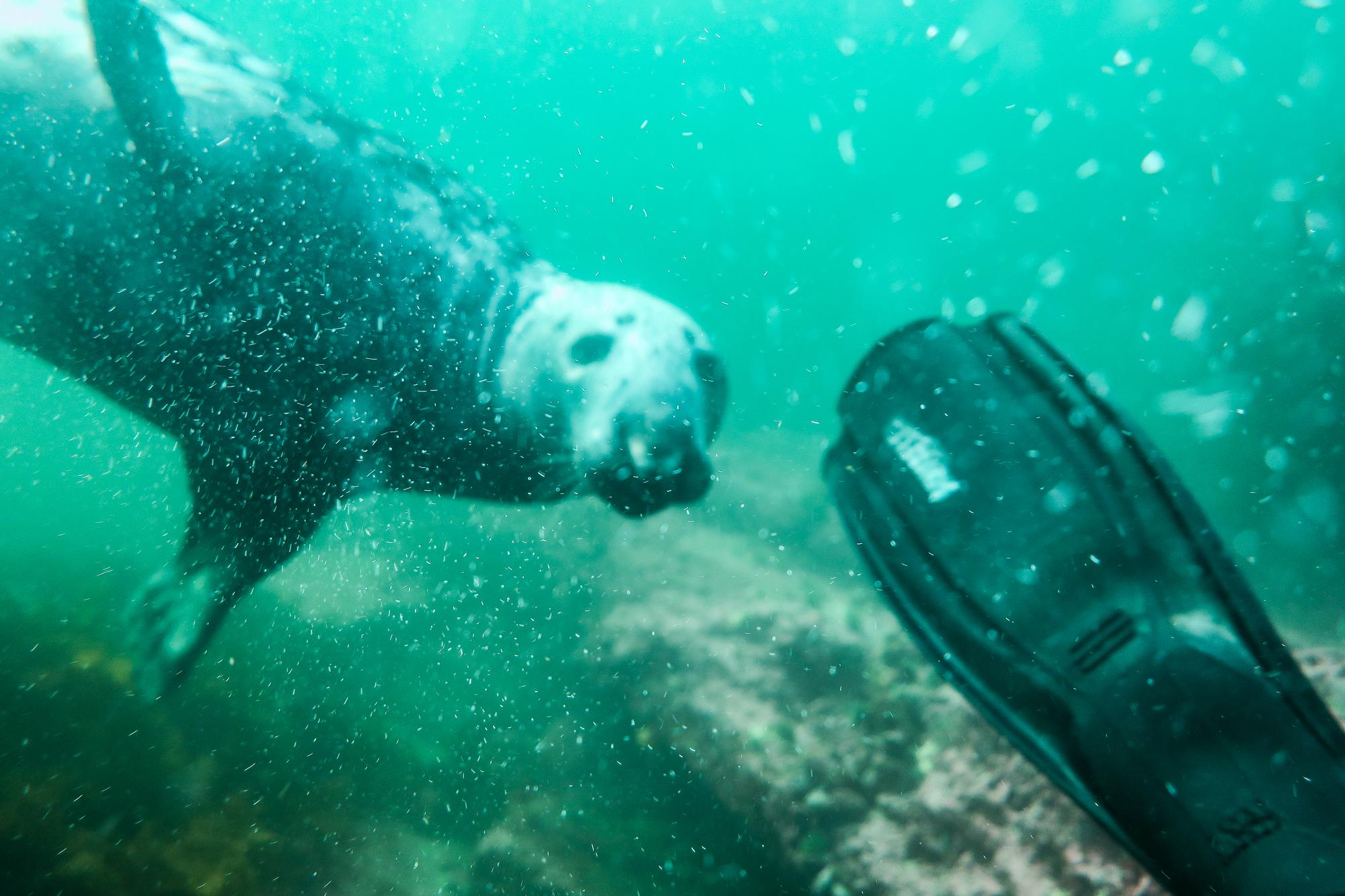 Mon nouveau binôme de plongée, Percé